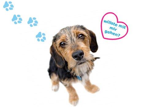 Hundebesitzer kennenlernen